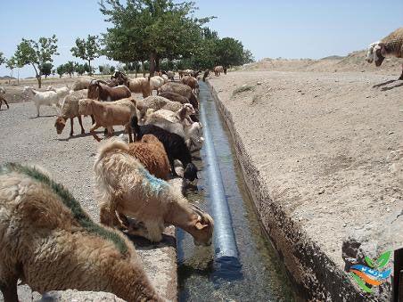 اهمیت آب در پرورش دام