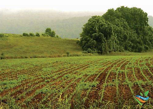 عملیات خاک ورزی و کاشت در شرایط خشکسالی