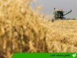 کاهش ضایعات گندم