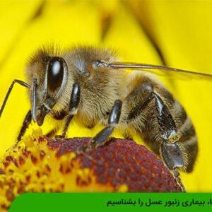 نوزما، بیماری زنبور عسل را بشناسیم