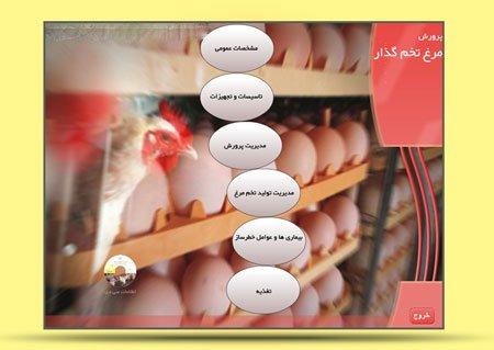 دانلود برنامه آموزشی 0 تا 100 پرورش مرغ تخم گذار