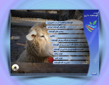 آموزش پرورش گوسفند