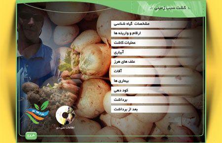 کاشت تا برداشت سیب زمینی