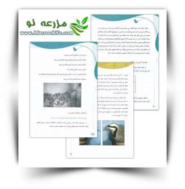 دانلود کتاب آموزش پرورش کبک