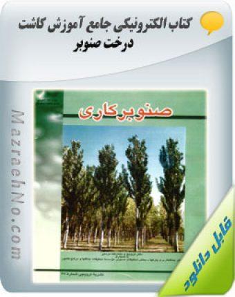 آموزش کاشت درخت صنوبر