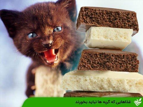 غذاهایی که گربه ها نباید بخورند
