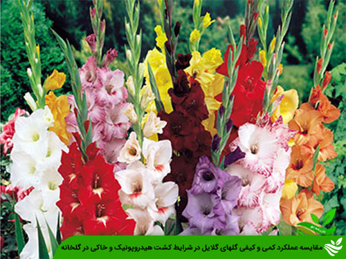 مقایسه عملکرد کمی و کیفی گلهای گلایل در شرایط کشت هیدروپونیک و خاکی در گلخانه