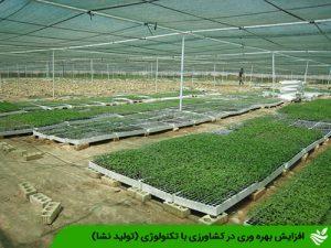 افزایش بهره وری در کشاورزی با تکنولوژی (تولید نشا)