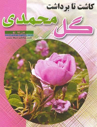 کاشت تا برداشت گل محمدی