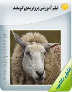ویدیوی آموزش پرواربندی گوسفند