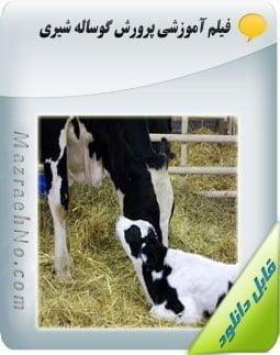 دانلود فیلم آموزش پرورش گوساله شیری Image