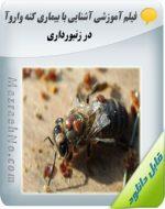 دانلود فیلم آشنایی با بیماری کنه واروآ در زنبورداری