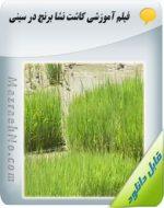 دانلود فیلم آموزش کاشت نشا برنج در سینی