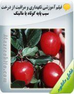دانلود فیلم آموزش نگهداری و مراقبت از درخت سیب پایه کوتاه یا مالینگ
