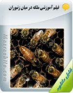 دانلود فیلم آموزشی ملکه در میان زنبوران