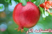 دانشنامه انار