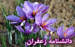 دانشنامه زعفران