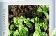 دانلود کتاب زراعت گیاه دارویی نعناع فلفلی