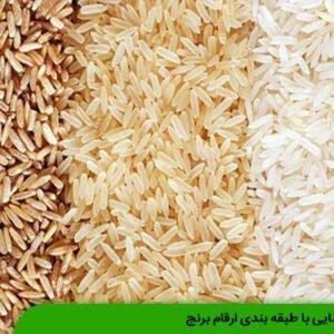 آشنایی با طبقه بندی ارقام برنج