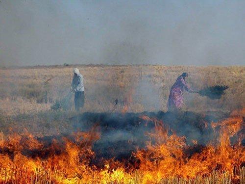مهمترین مضرات آتش زدن بقایای گیاهی در اراضی زراعی