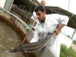مدیریت بهداشتی مزارع پرورش ماهیان خاویاری