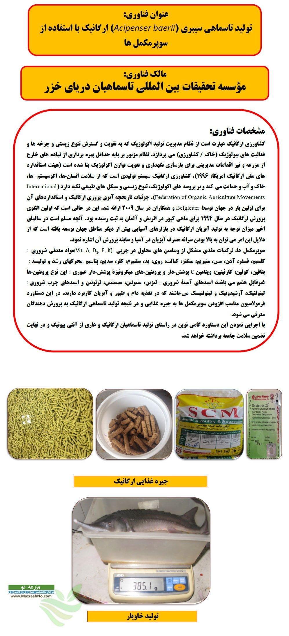 تولید تاسماهی سیبری ارگانیک با استفاده از سوپر مکمل ها