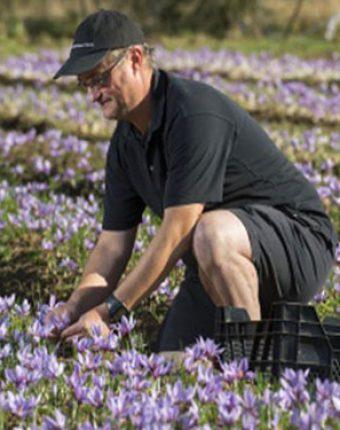 آشنایی با گیاه زعفران (مرحله کاشت)
