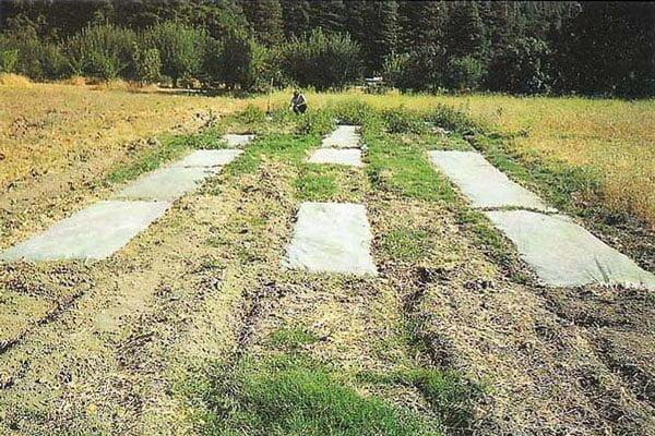 ضدعفونی خاک آلوده به نماتد با پلاستیک شفاف در فصل گرمبه صورت لکه گیری موضعی