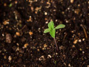 معرفی روشی موثر در کاهش آلودگی کود دامی به بذر علفهای هرز