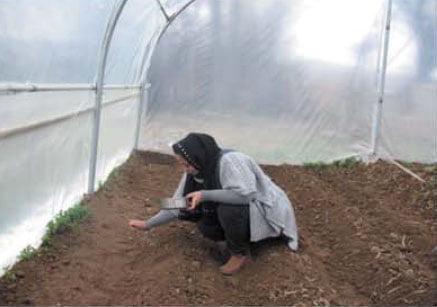 کاشت بذر در گلخانه خانگی
