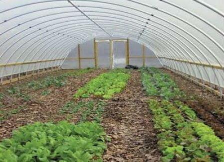 تولید سبزیجات برگی در گلخانه خانگی