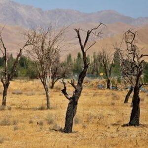 توصیه های فنی و کاربردی جهت کاهش خسارت خشکسالی در باغات