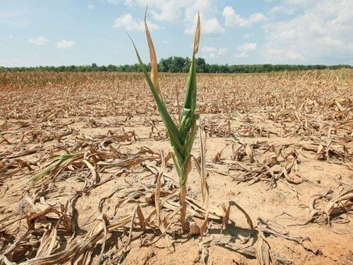 توصیه های فنی و کاربردی جهت کاهش خسارت خشکسالی در مزارع