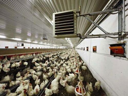راه کارهای کاهش مصرف سوخت در مرغداری ها