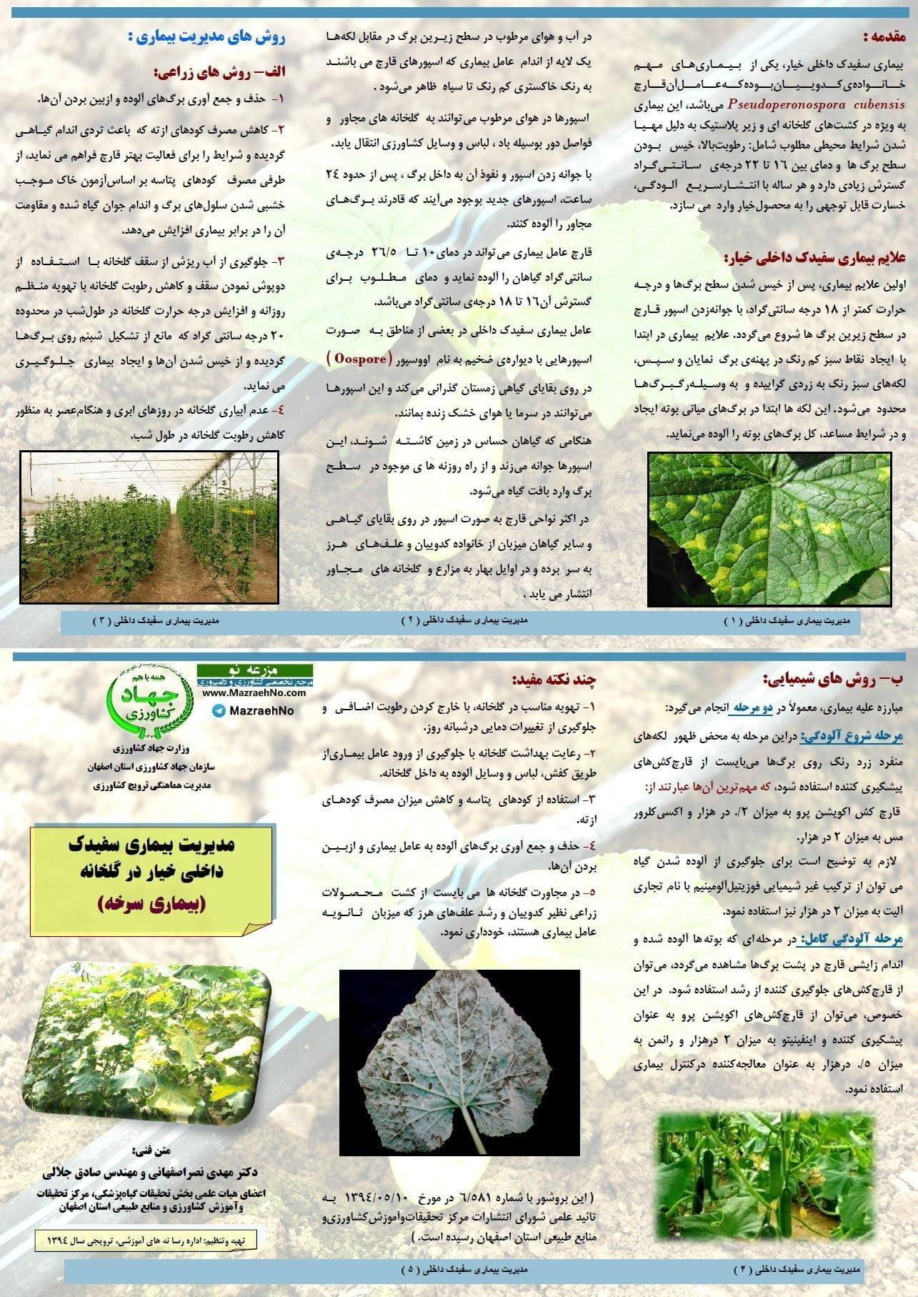 مدیریت بیماری سفیدک داخلی خیار در گلخانه (بیماری سرخه)