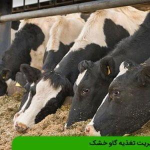مدیریت تغذیه گاو خشک
