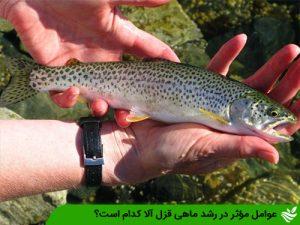 عوامل مؤثر در رشد ماهی قزل آلا كدام است؟