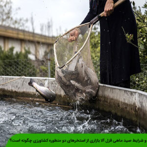 صید ماهی قزل آلا بازاری از استخر
