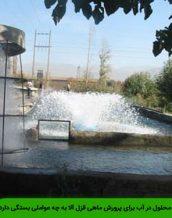 میزان اکسیژن محلول در آب برای پرورش ماهی قزل آلا به چه عواملی بستگی دارد؟