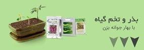انواع بذر و تخم گیاه