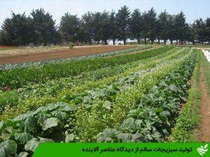 تولید سبزیجات سالم از دیدگاه عناصر آلاینده