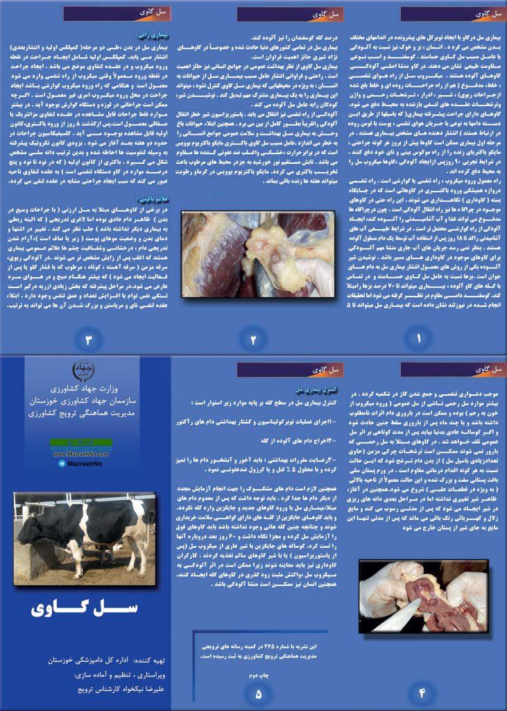 بروشور بیماری سل گاوی