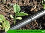 آبیاری نواری (تیپ) زمین های کشاورزی