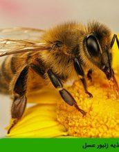آموزش تغذیه زنبور عسل