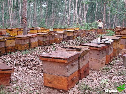 راهنمای مدیریت احداث زنبورستان