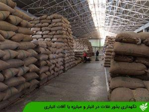 نگهداری بذور غلات در انبار و مبارزه با آفات انباری
