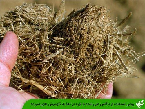 روش استفاده از باگاس غنی شده با اوره در تغذیه گاومیش های شیرده