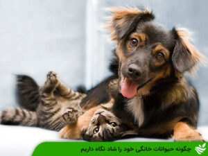 چگونه حیوانات خانگی خود را شاد نگاه داریم