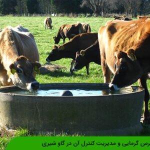 استرس گرمایی و مدیریت کنترل آن در گاو شیری