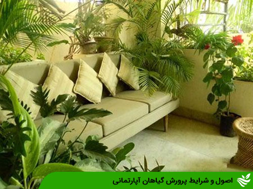 اصول و شرایط پرورش گیاهان آپارتمانی